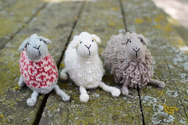SHEEP! © Susan B Anderson