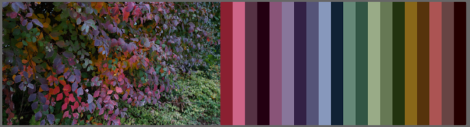 I snapped this last autumn as an example of the surprisingly intense and varied colours I kept seeing. Deep plum, hot pink and cornflower blue aren't really what I associate with October (but now they're my favourite autumn shades).